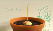 Avokaduja plantido / にょきにょきアボカド
